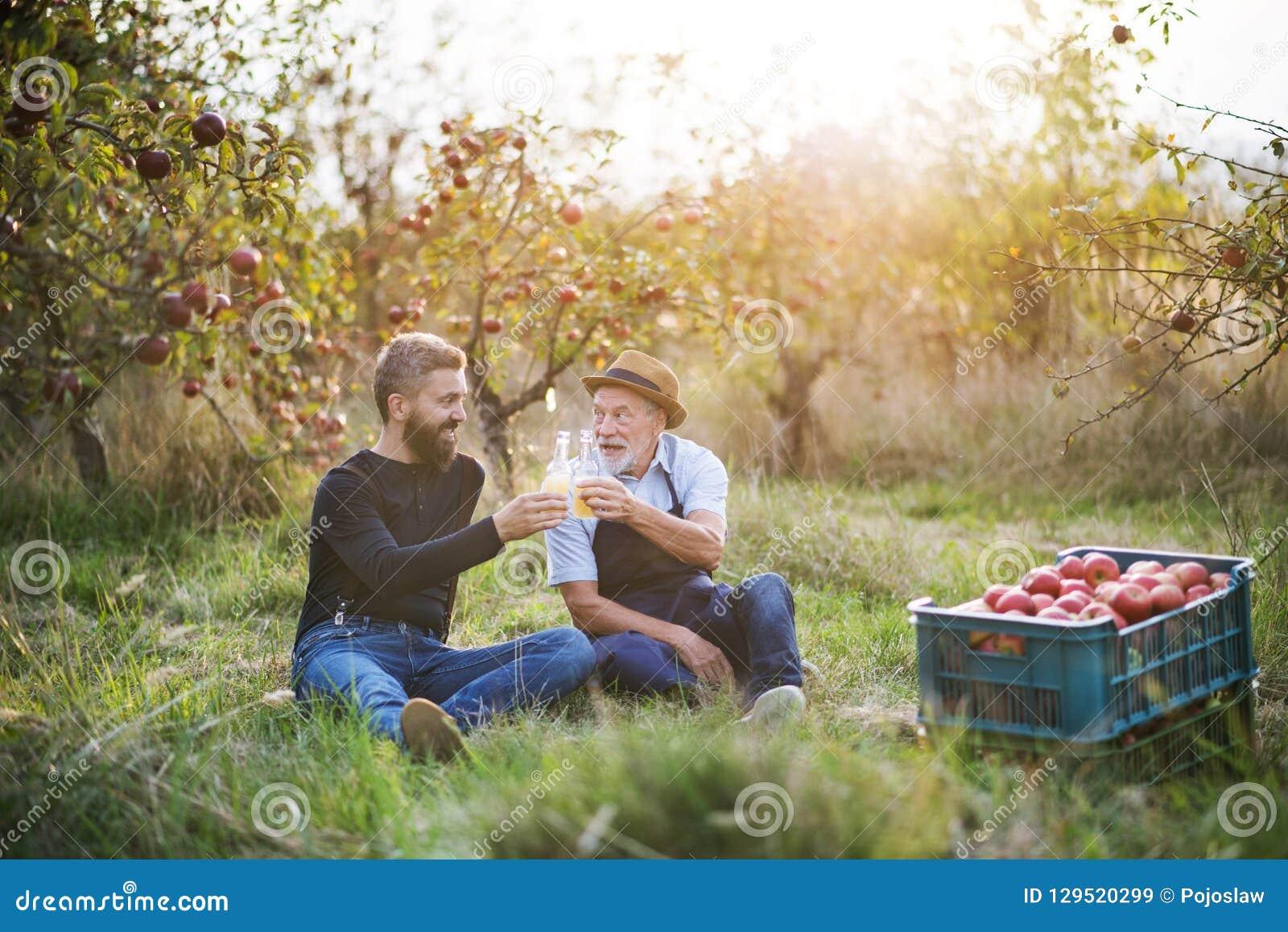 Ein älterer Mann mit dem erwachsenen Sohn, der Flaschen mit Apfelwein im Apfelgarten im Herbst hält
