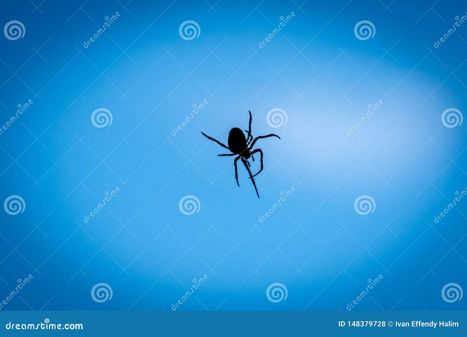 Ein Abschluss herauf Schattenbild einer Spinne mit blauem Hintergrund
