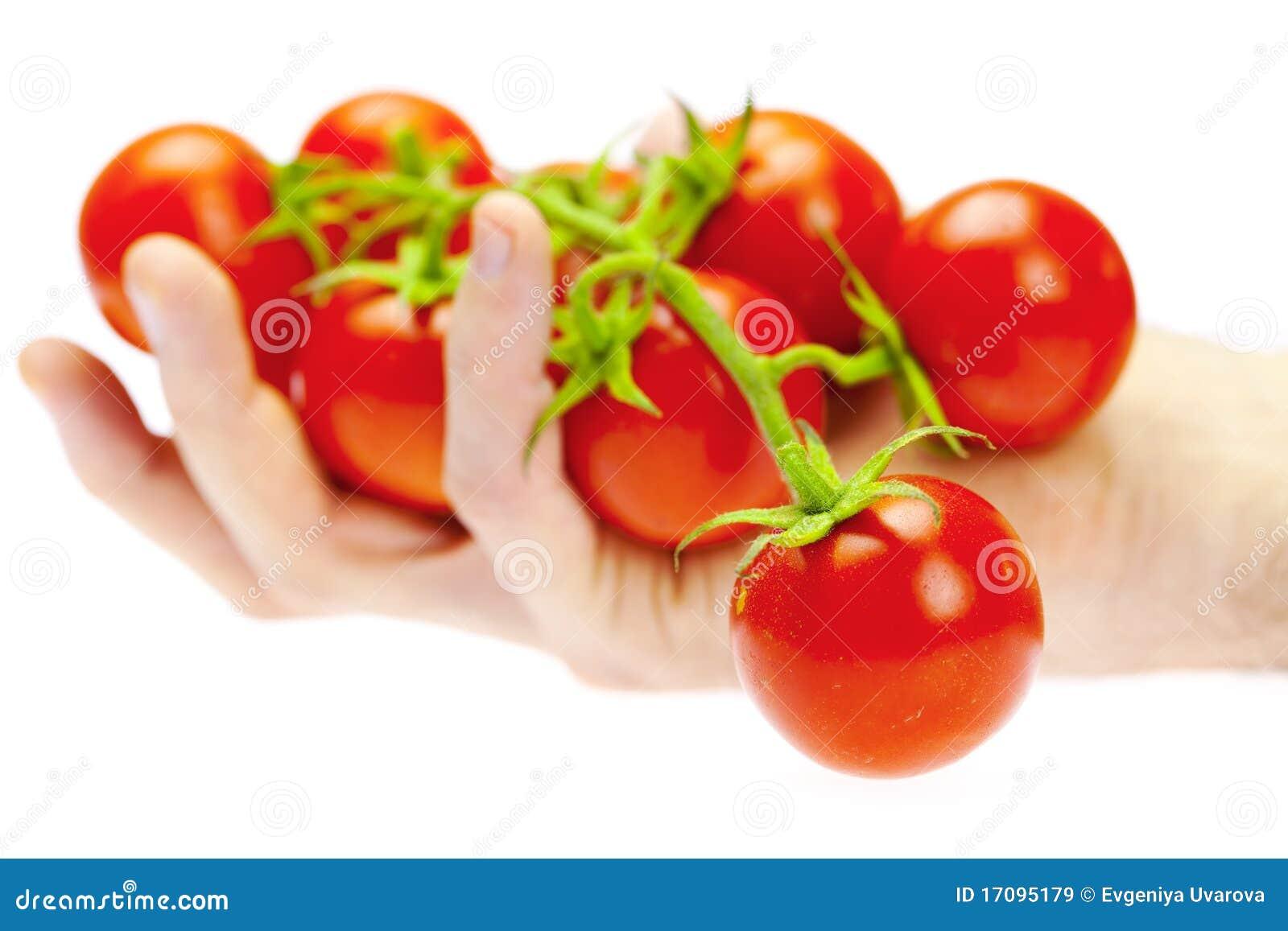 Ein Bündel der Tomate in Ihrem Handmann