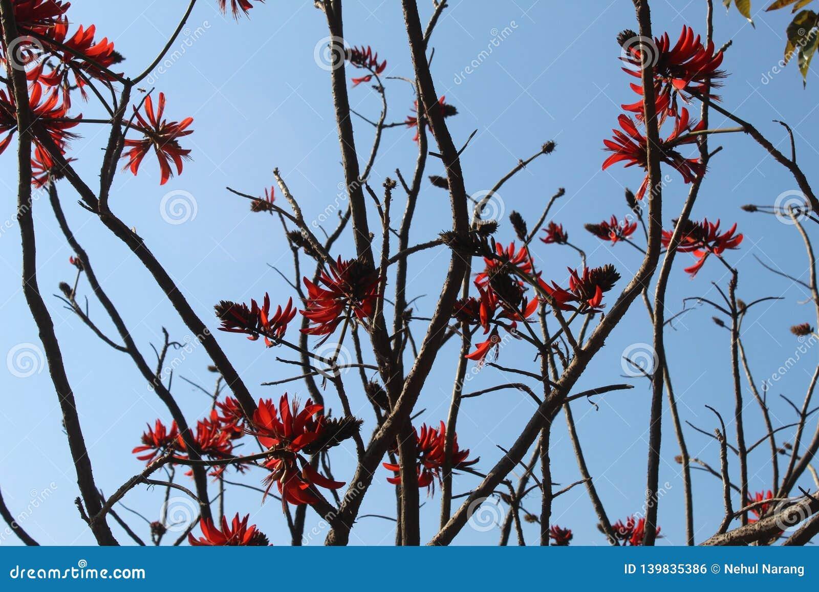 Ein Bündel einzigartige rote Blumen, die an einem Baum hängen