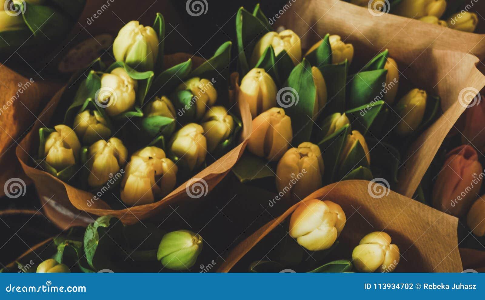 Ein Bündel Tulpen