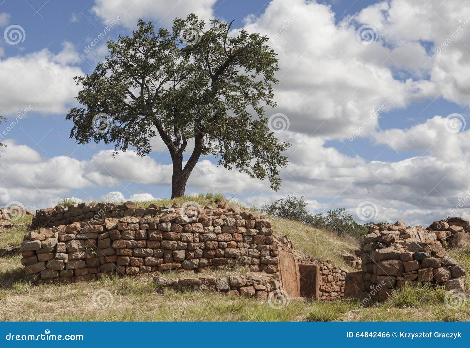 Ein Baum und die Wände