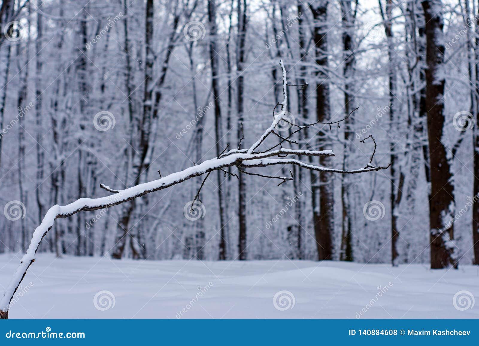 Ein bloßer blattloser Baum mit einer interessanten Form in einer Winterwaldlandschaft