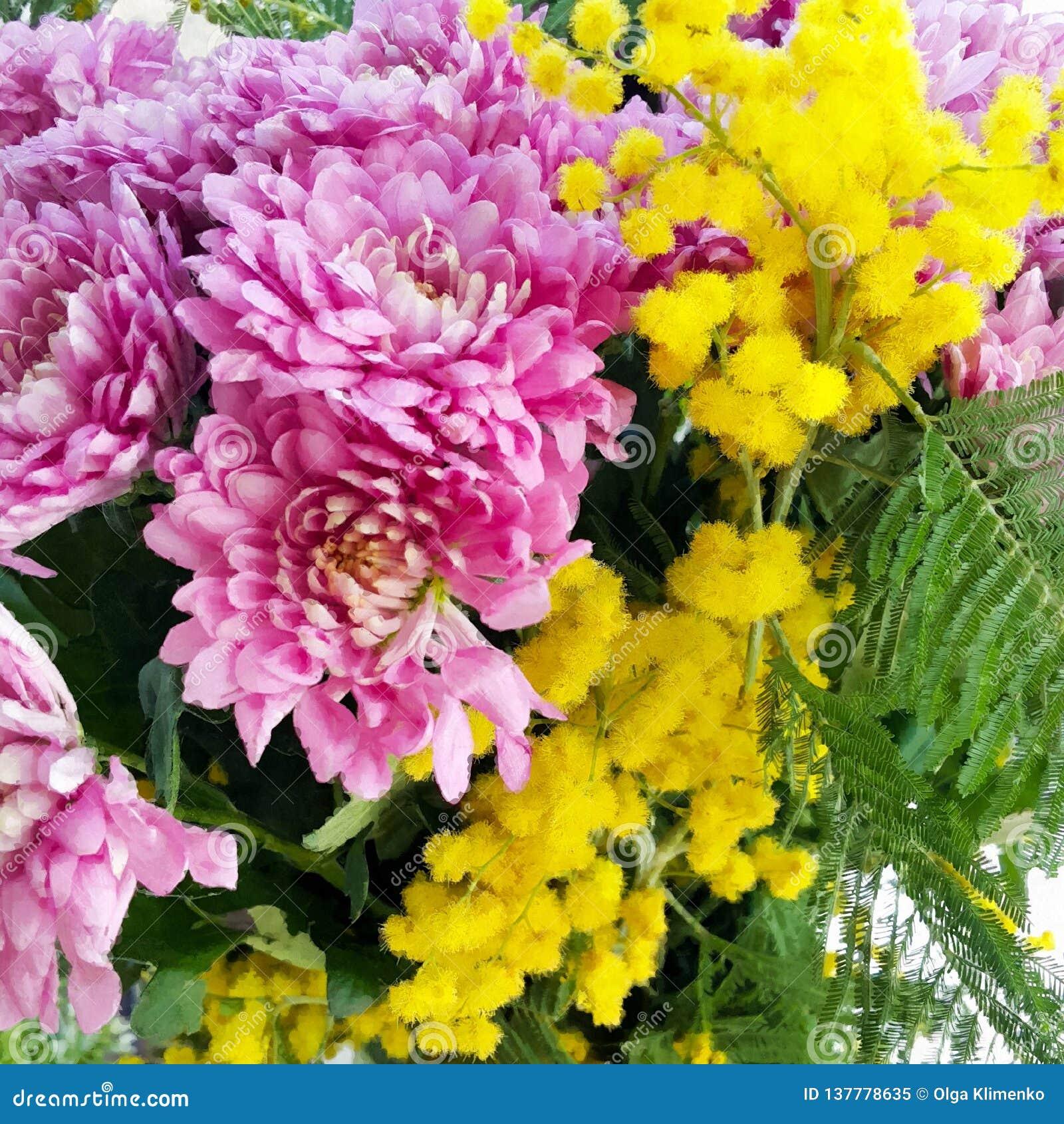 Ein Blumenstrauß von Chrysanthemen und von Mimosennahaufnahme mit grünen Blättern