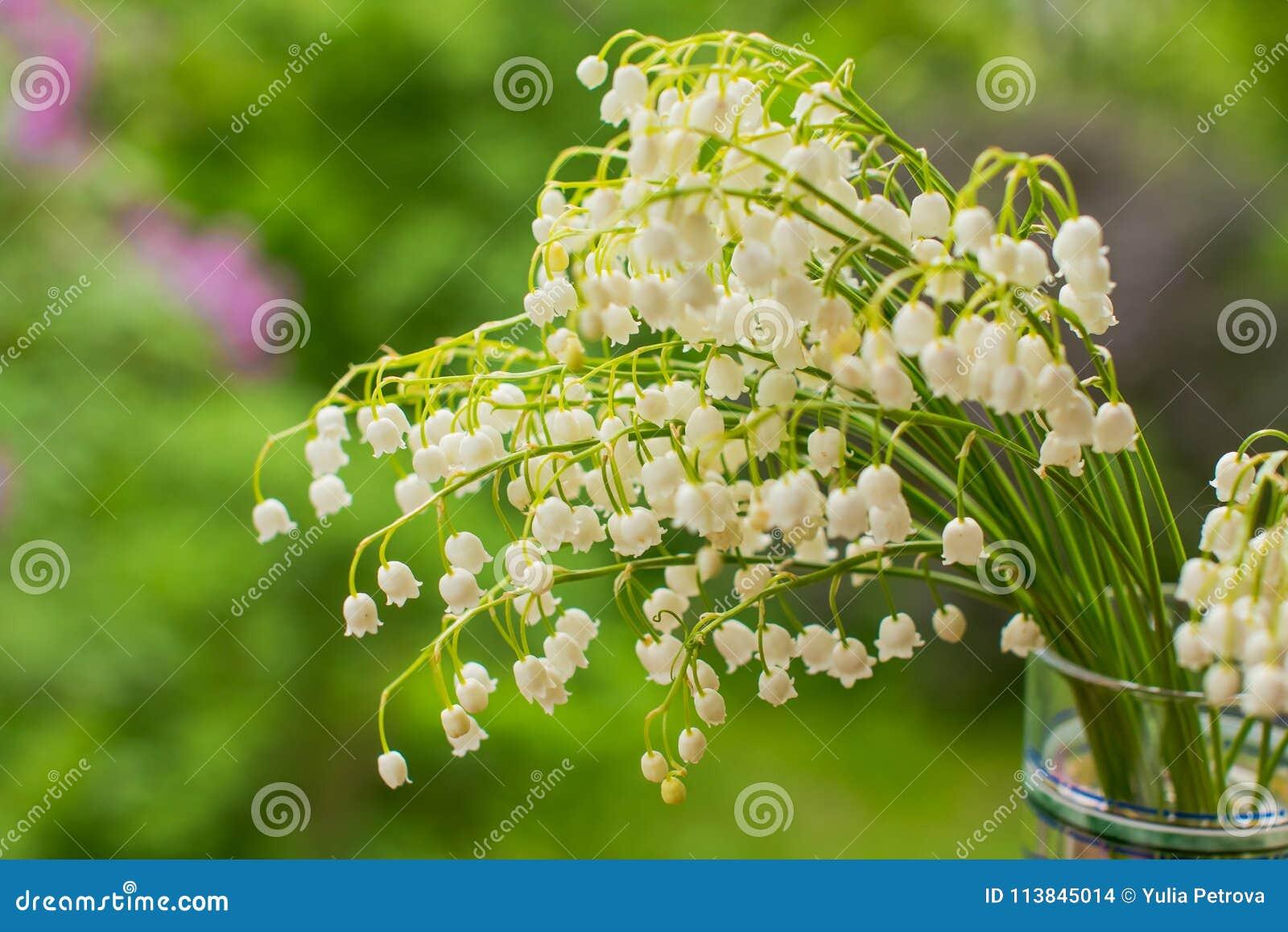 Ein Blumenstrauß von Maiglöckchen ist in einem einfachen Glasvase auf einem grünen Hintergrund Hintergrund mit wohlriechenden Mai