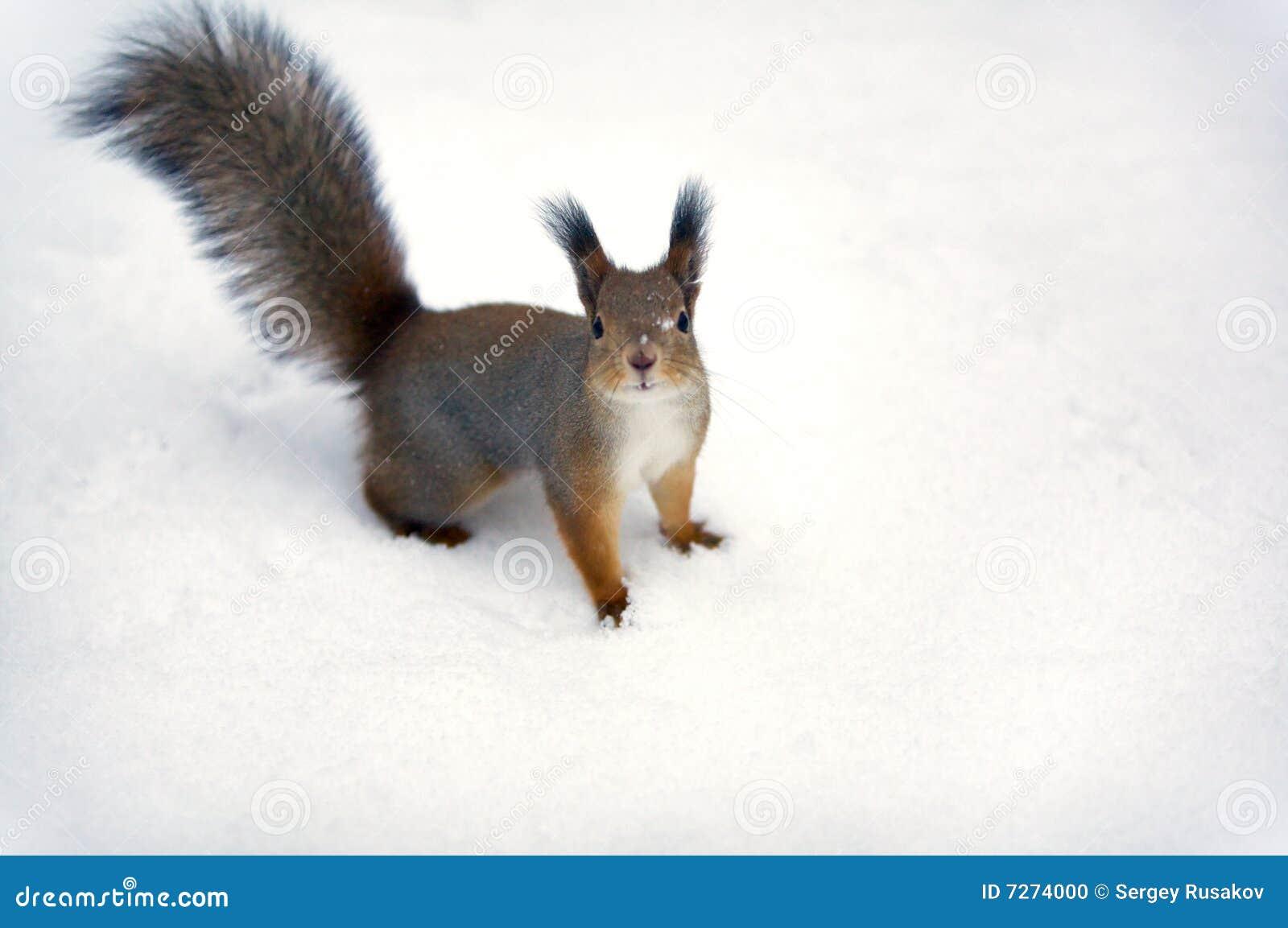 Ein Eichhörnchenhintergrund.