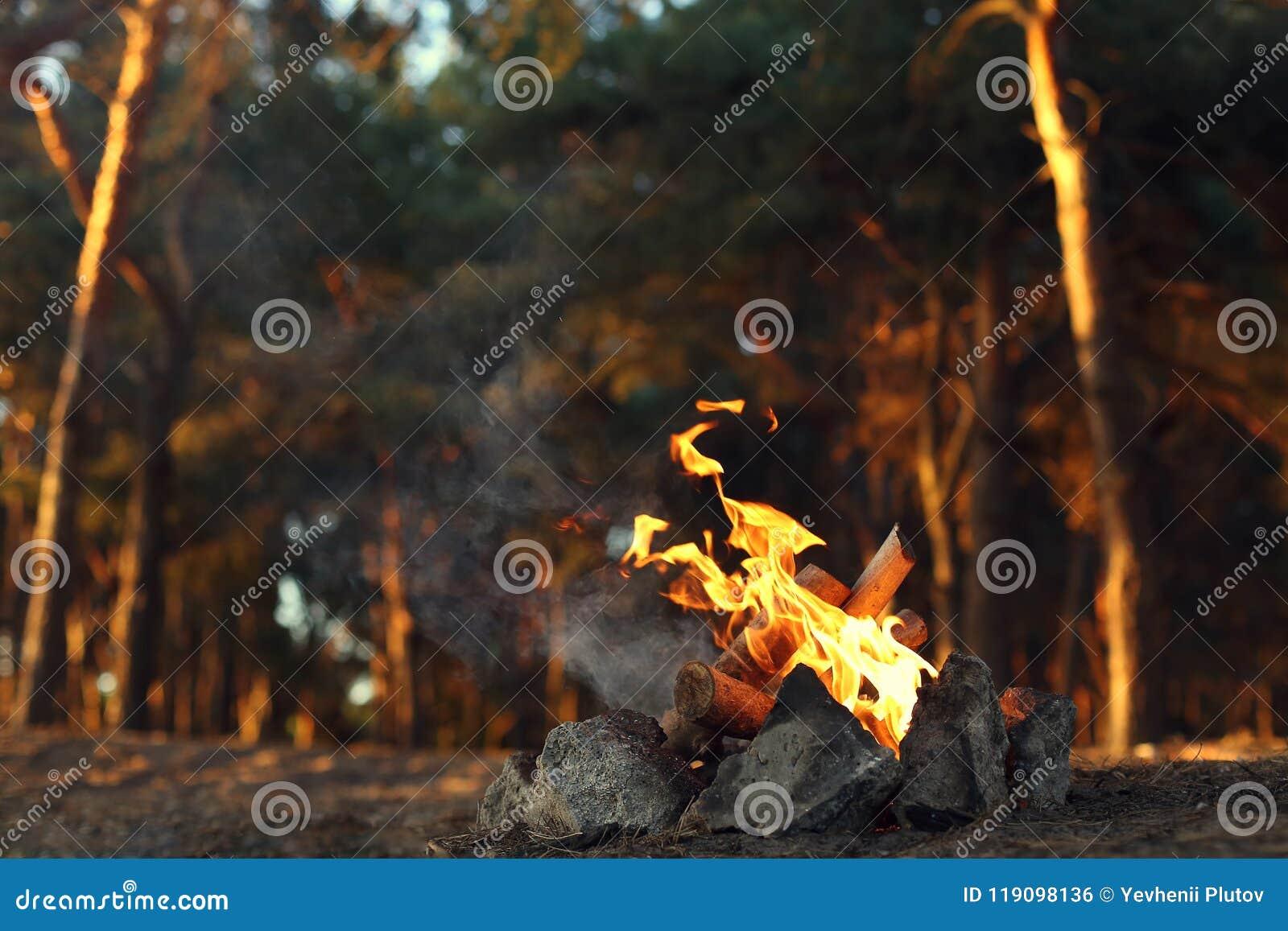 Ein Feuer in einem Kiefernwald