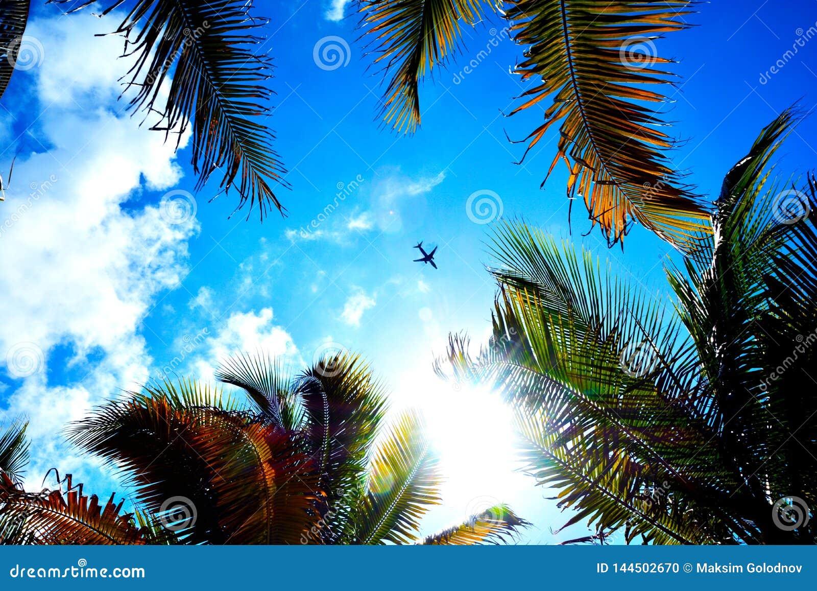 Ein flaches Fliegen über der Palme
