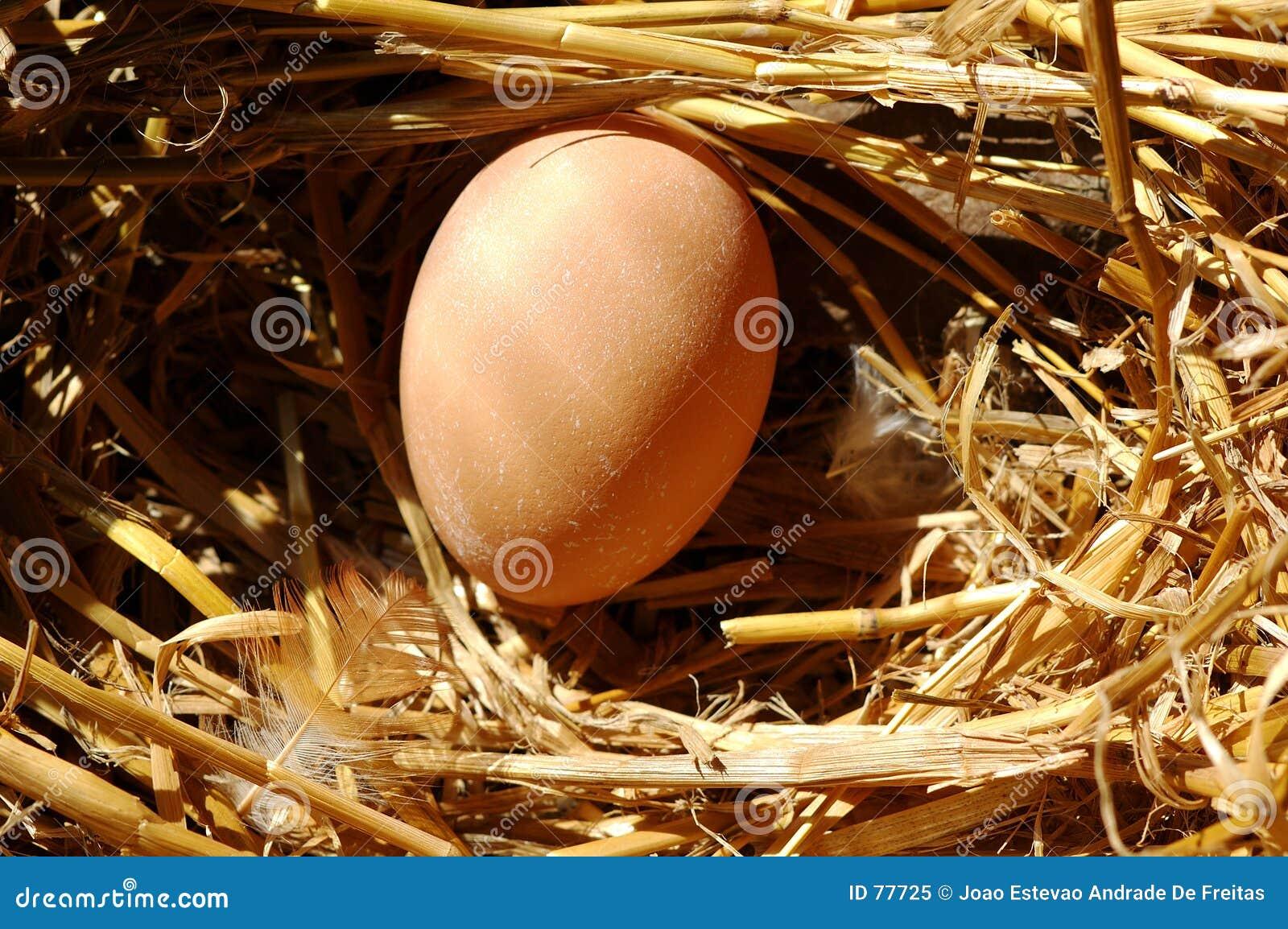 Ein frisches Ei