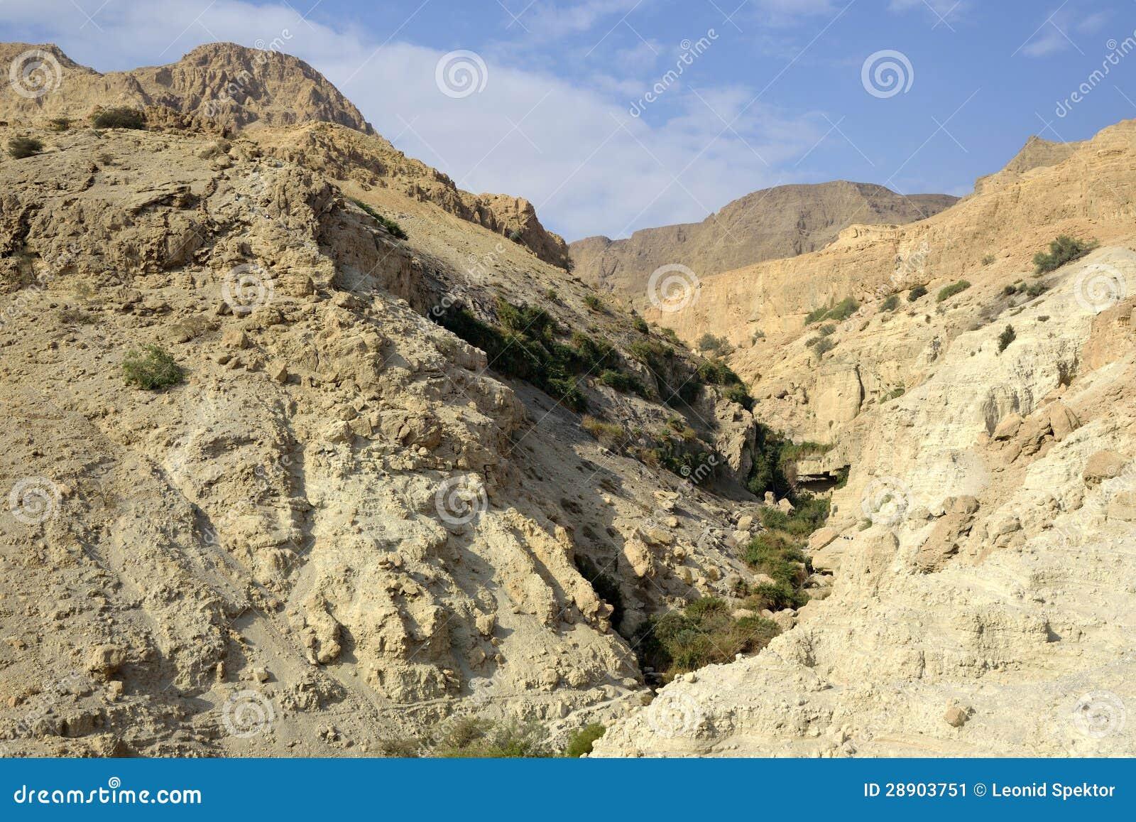 Ein Gedi峡谷在Judea沙漠。