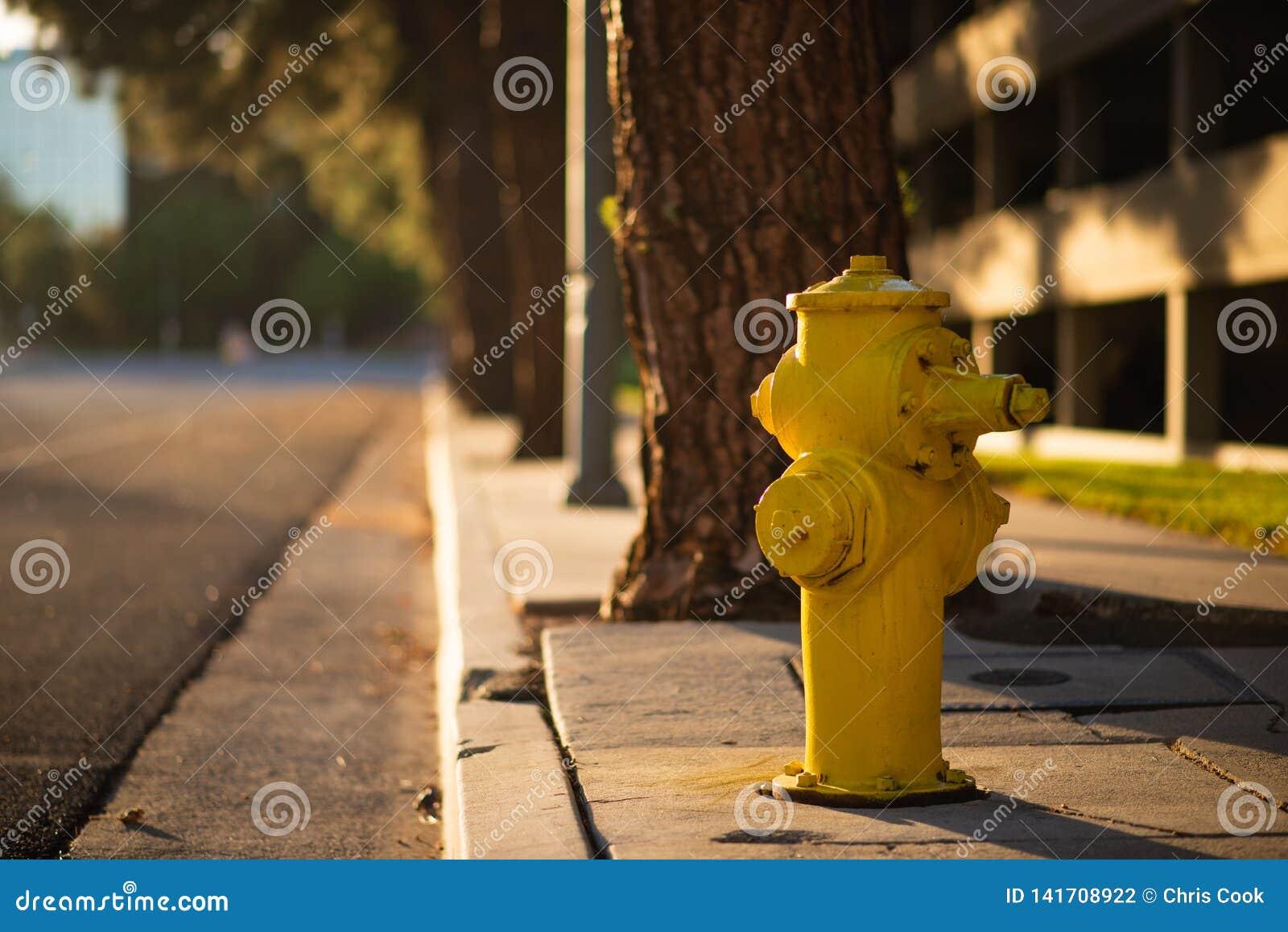 Ein gelber Hydrant nahe bei der Seite einer Straße während des Sonnenuntergangs im LA, Amerika