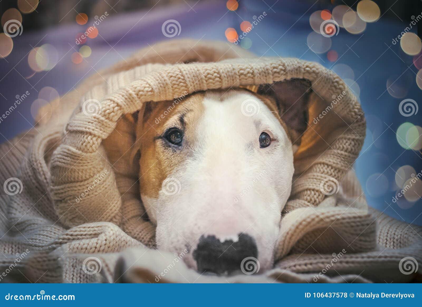 Ein Hund begrüßt das neue Jahr