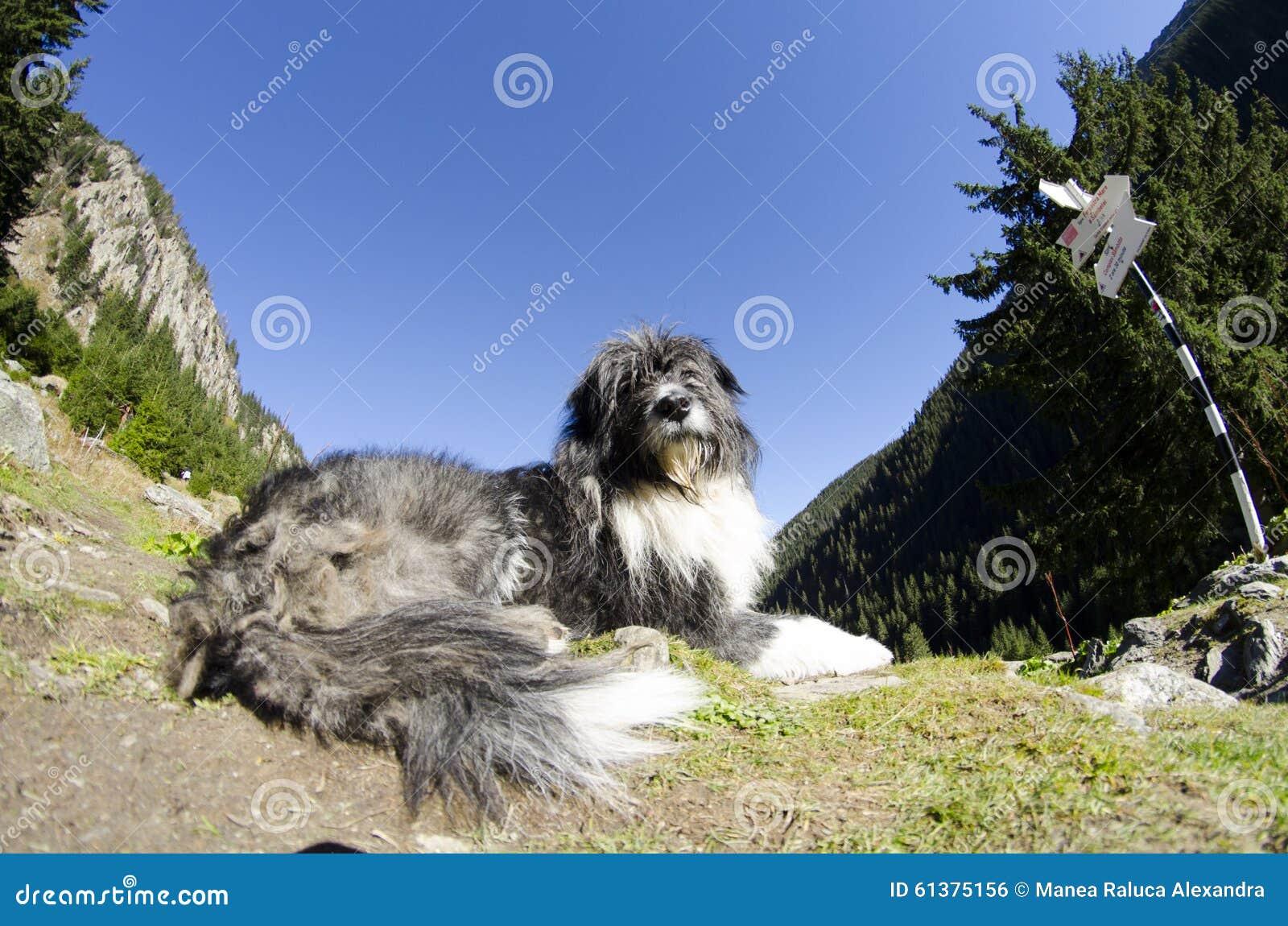 Ein Hund, der im Berg schützt