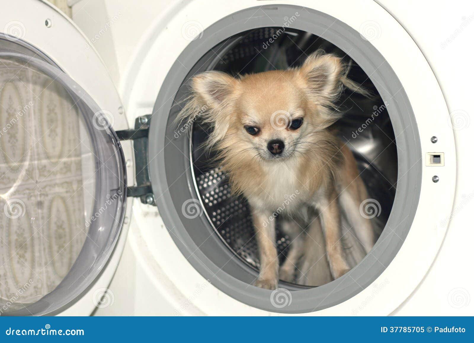 ein hund in der waschmaschine stockbild bild 37785705. Black Bedroom Furniture Sets. Home Design Ideas
