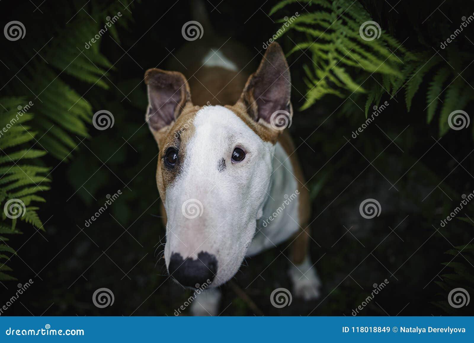 Ein Hund in einem mysteriösen Wald