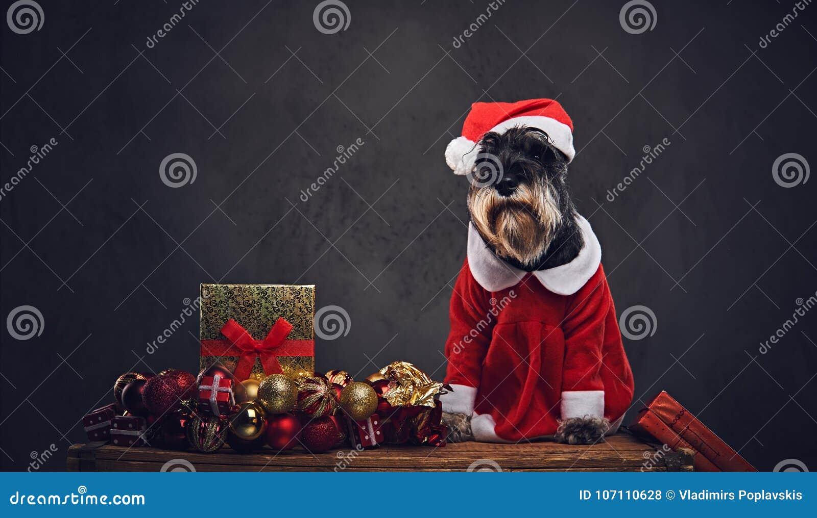 Ein Hund kleidete im Weihnachts-Kleid auf einer Holzkiste mit Weihnachts-garla an