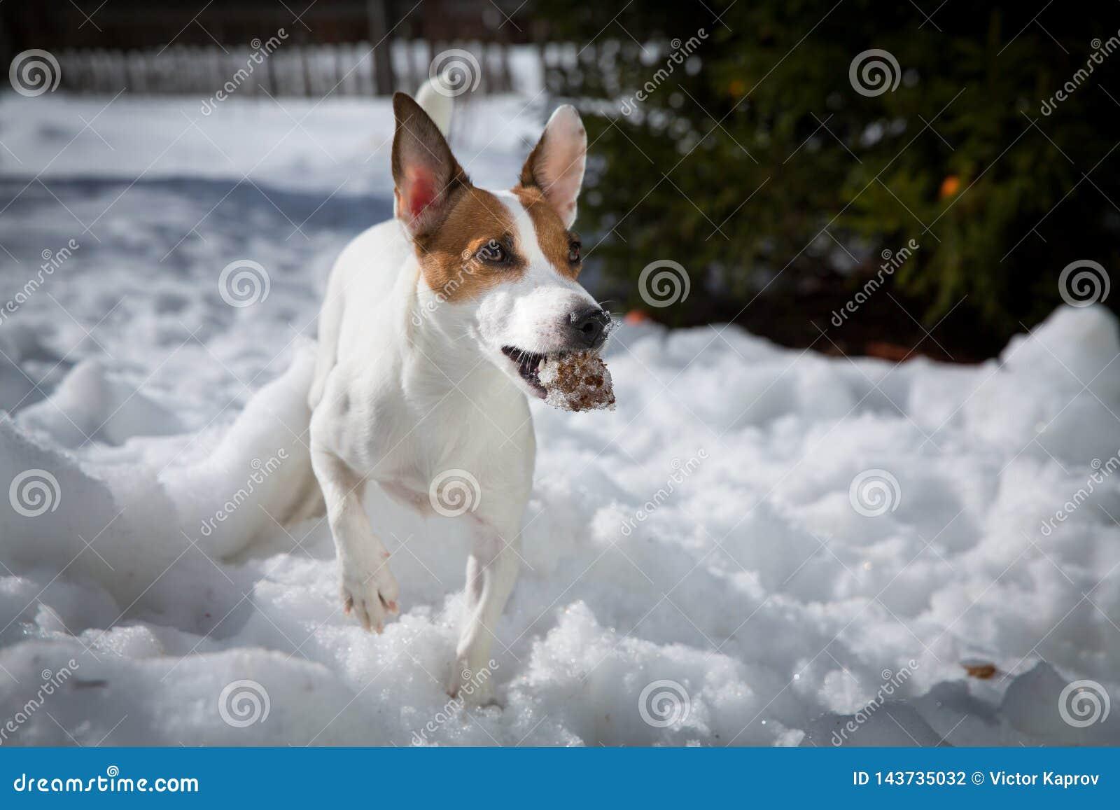 Ein Hund mit einem Stoß im Schnee