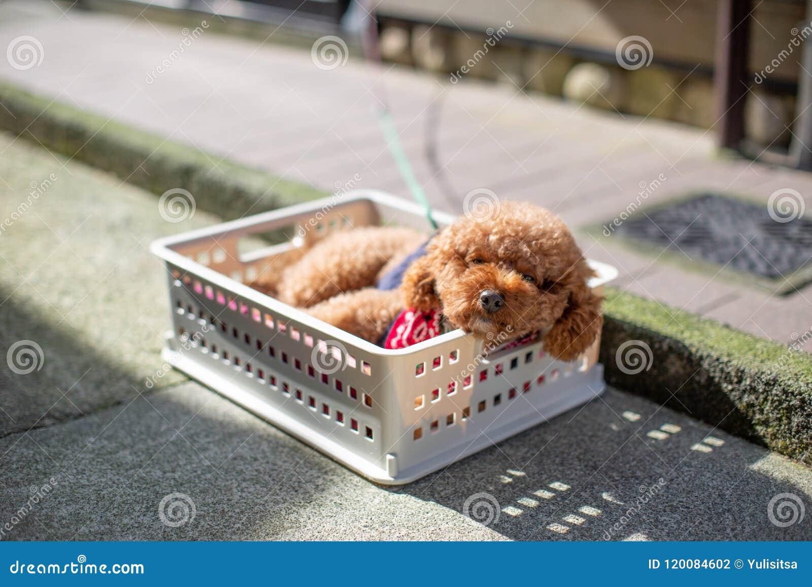 Ein Hund steht am Sommertag still