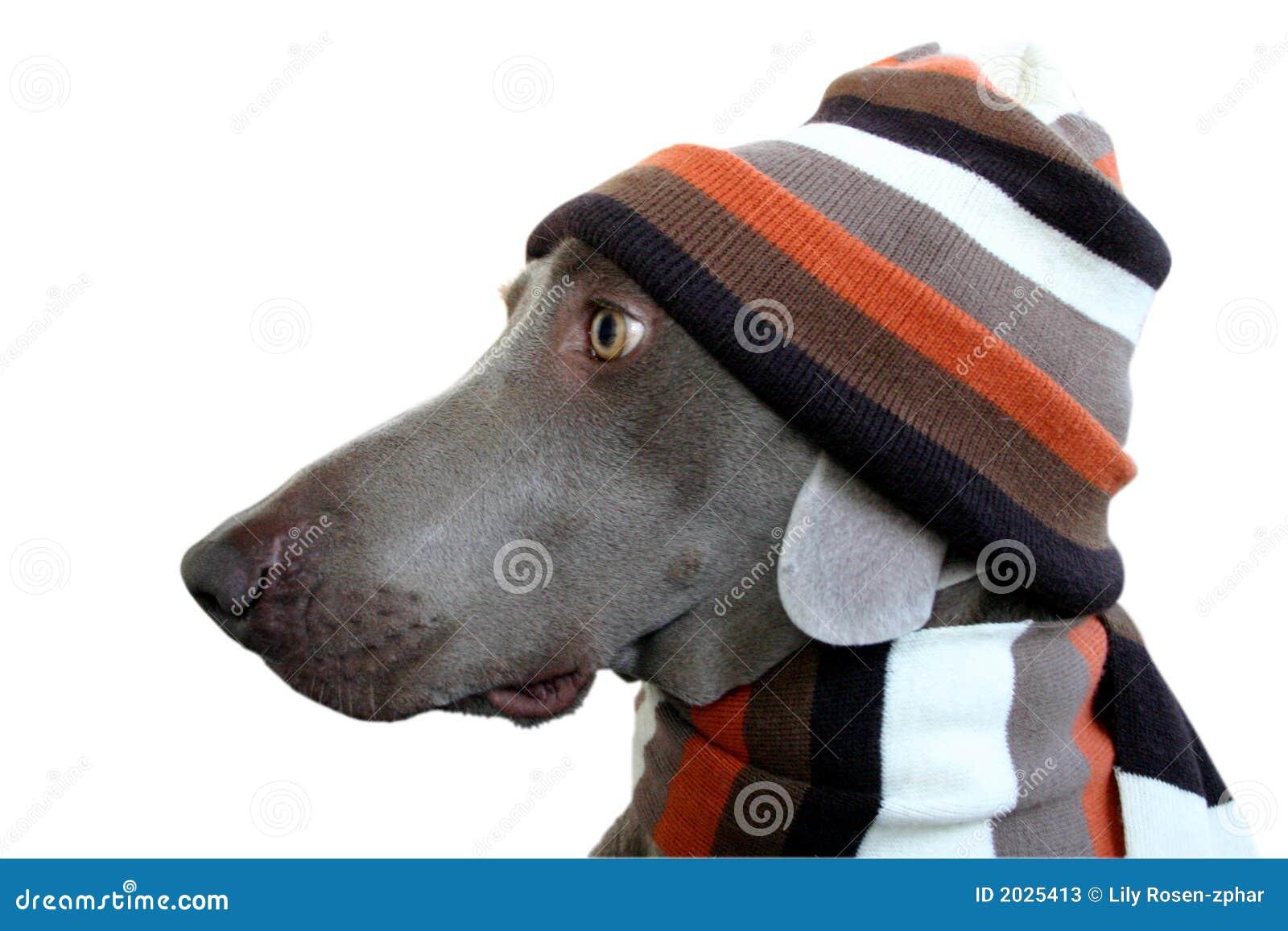 Ein Hundeprofil mit Hut und Schal