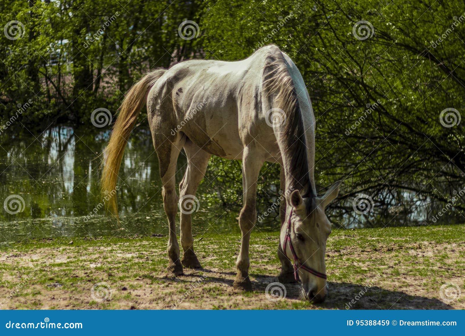 Ein hungriges Pferd