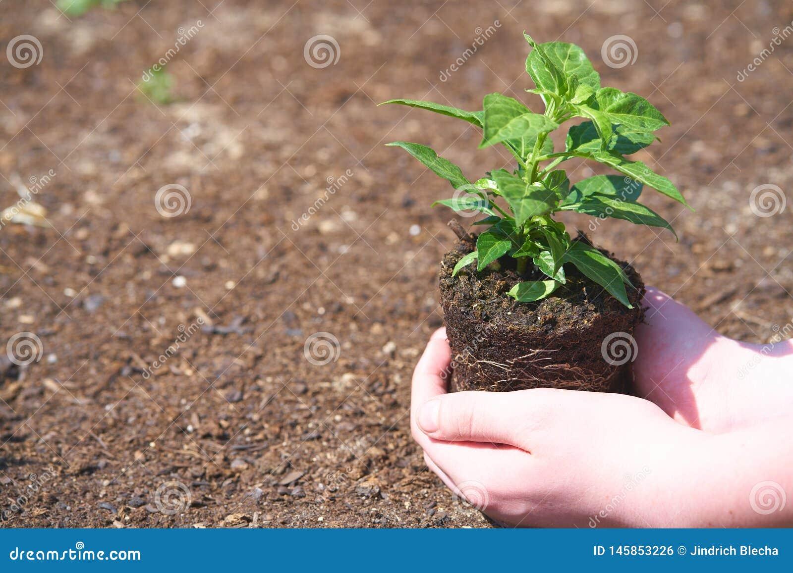 Ein Kind mit kleiner Gr?npflanze