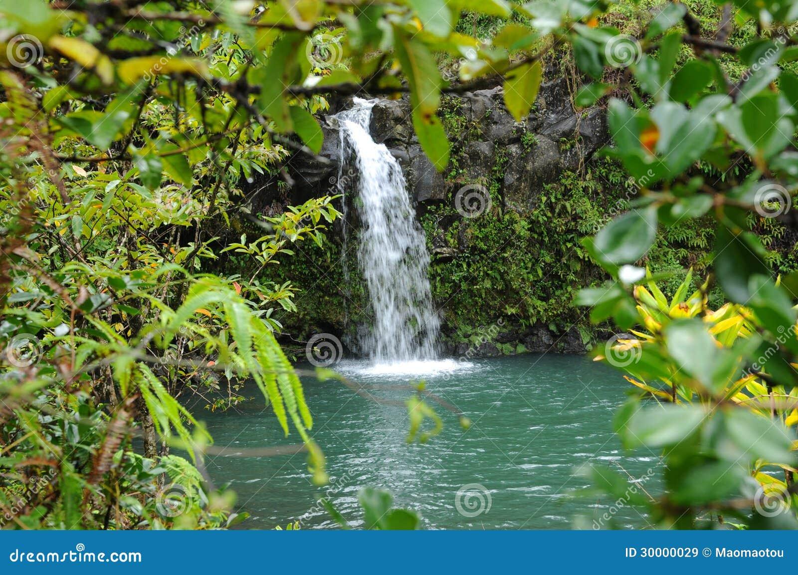 Wasserfall im regenwald stockbild bild von klima teich for Kleiner teich