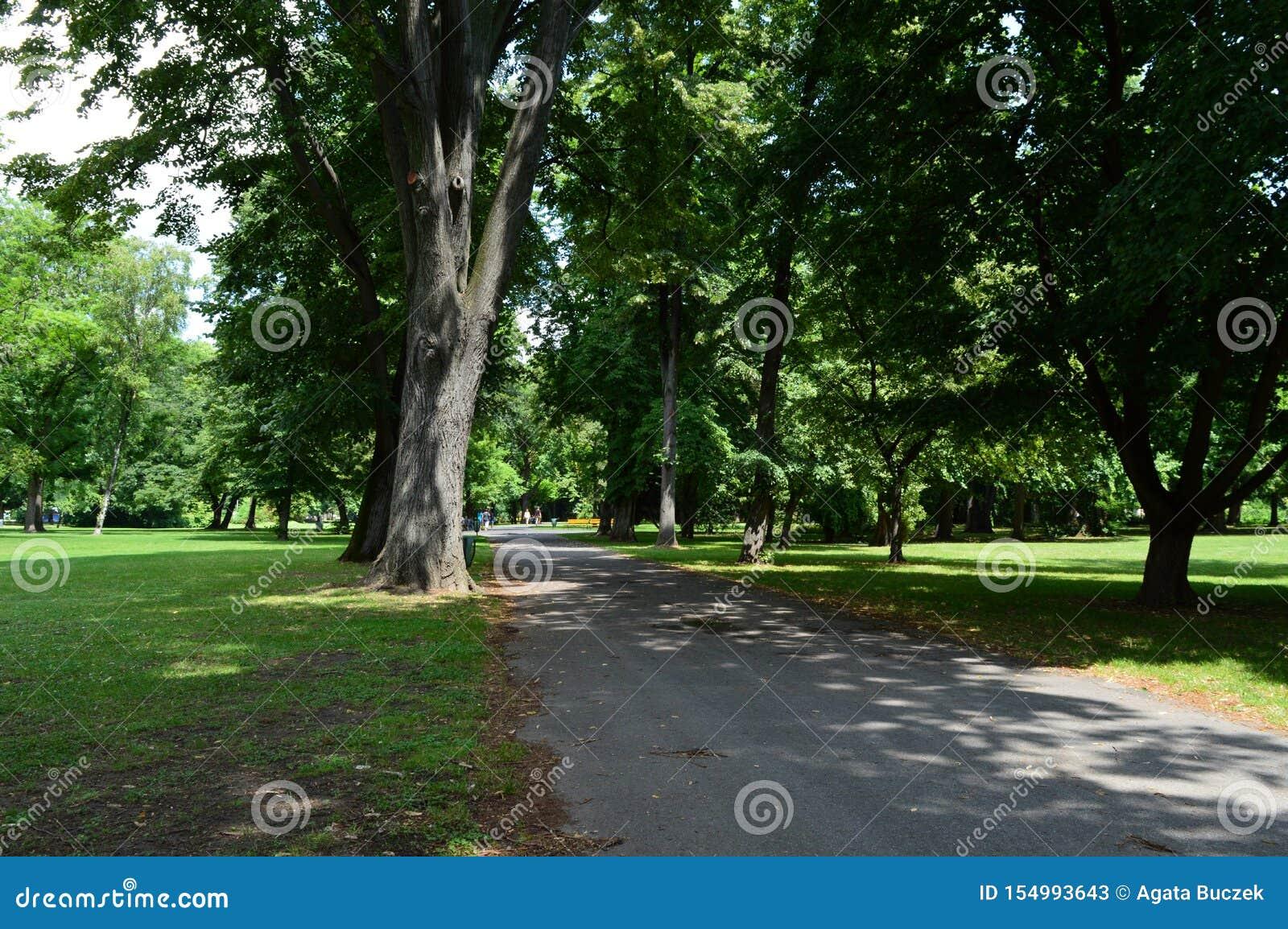 Ein leerer Weg im Park