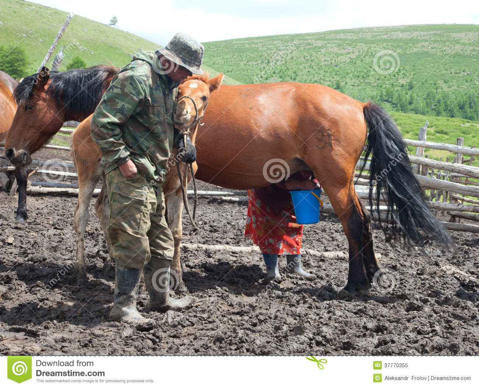 Ein Mann Und Eine Frau, Die Ein Pferd Melken Lizenzfreies