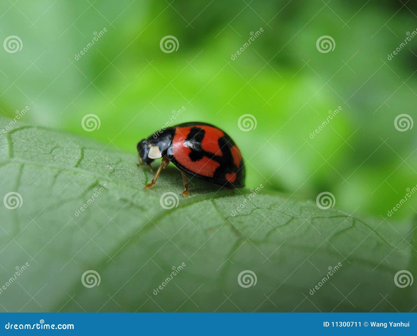 Ein Marienkäfer mit einem wenig Inneren in der Karosserie