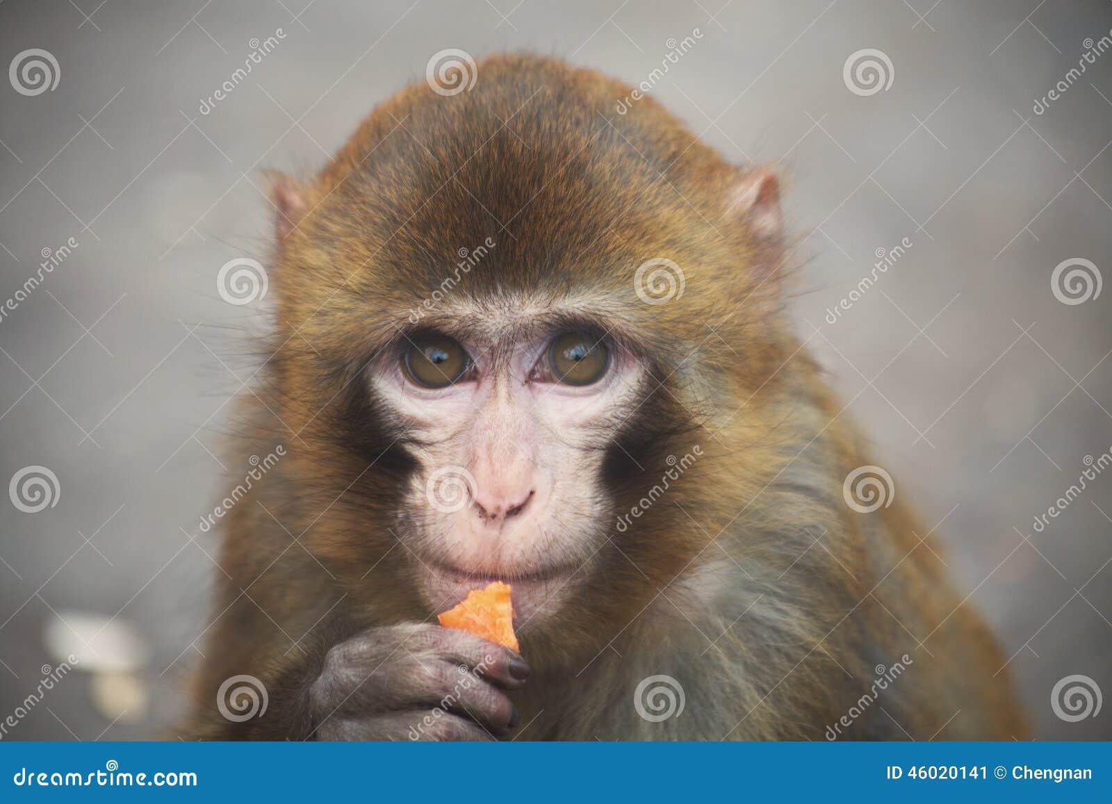 Exquisit Haustier Affe Sammlung Von Pattern Ein Melancholischer Kleiner Stockbild - Bild