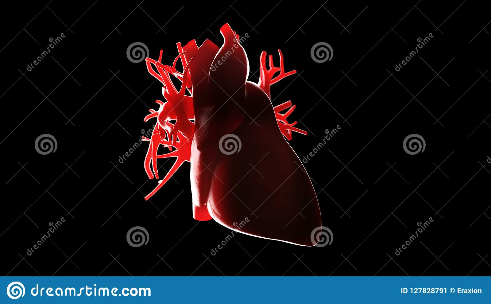 Ein menschliches Herz