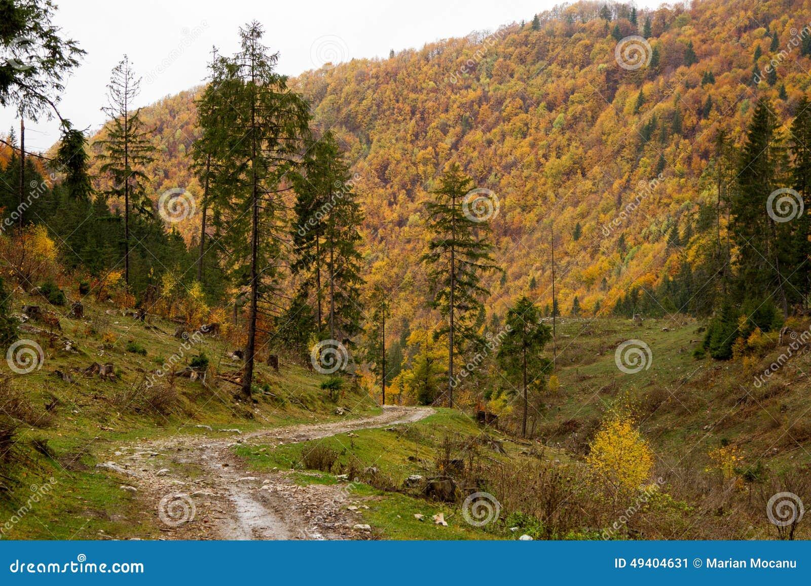Download Ein Nadelholz im Osteuropa stockbild. Bild von outdoor - 49404631