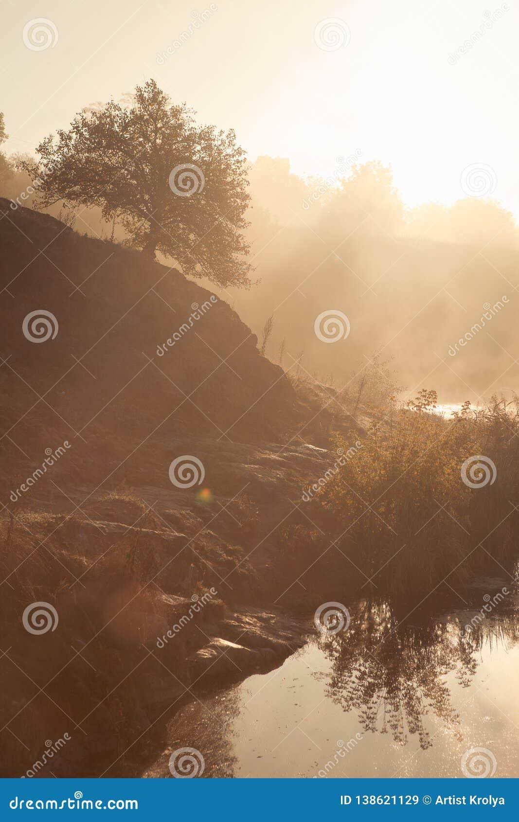 Ein nebelhafter Morgen durch den See Schattenbild von Bäumen mit Sonnenstrahlen