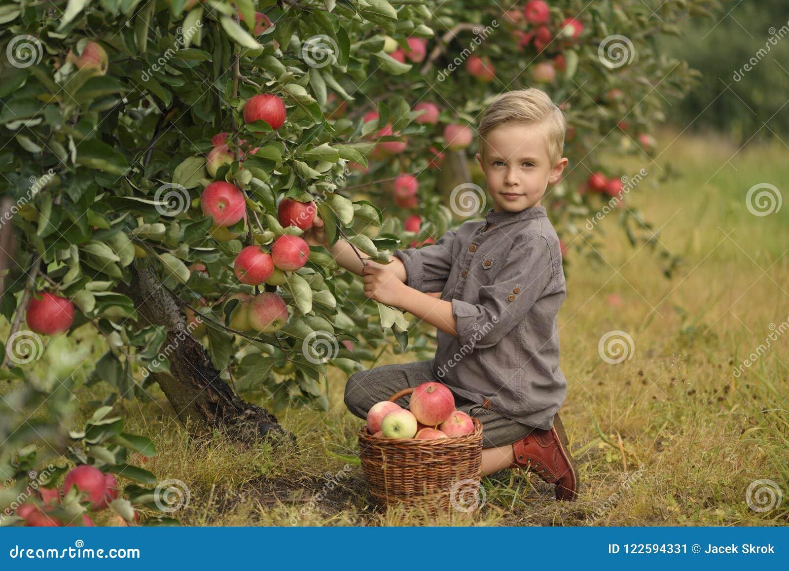 Ein netter, lächelnder Junge wählt Äpfel in einem Apfelgarten aus und hält einen Apfel