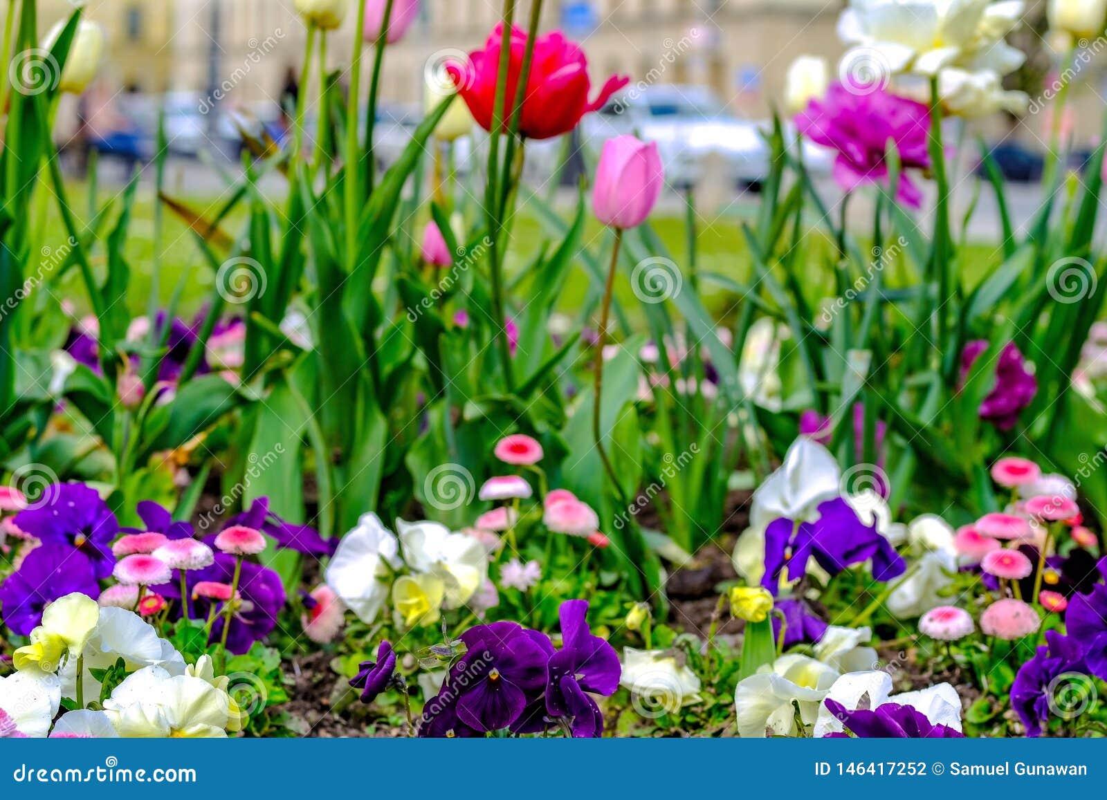 Ein Park mit Blumen