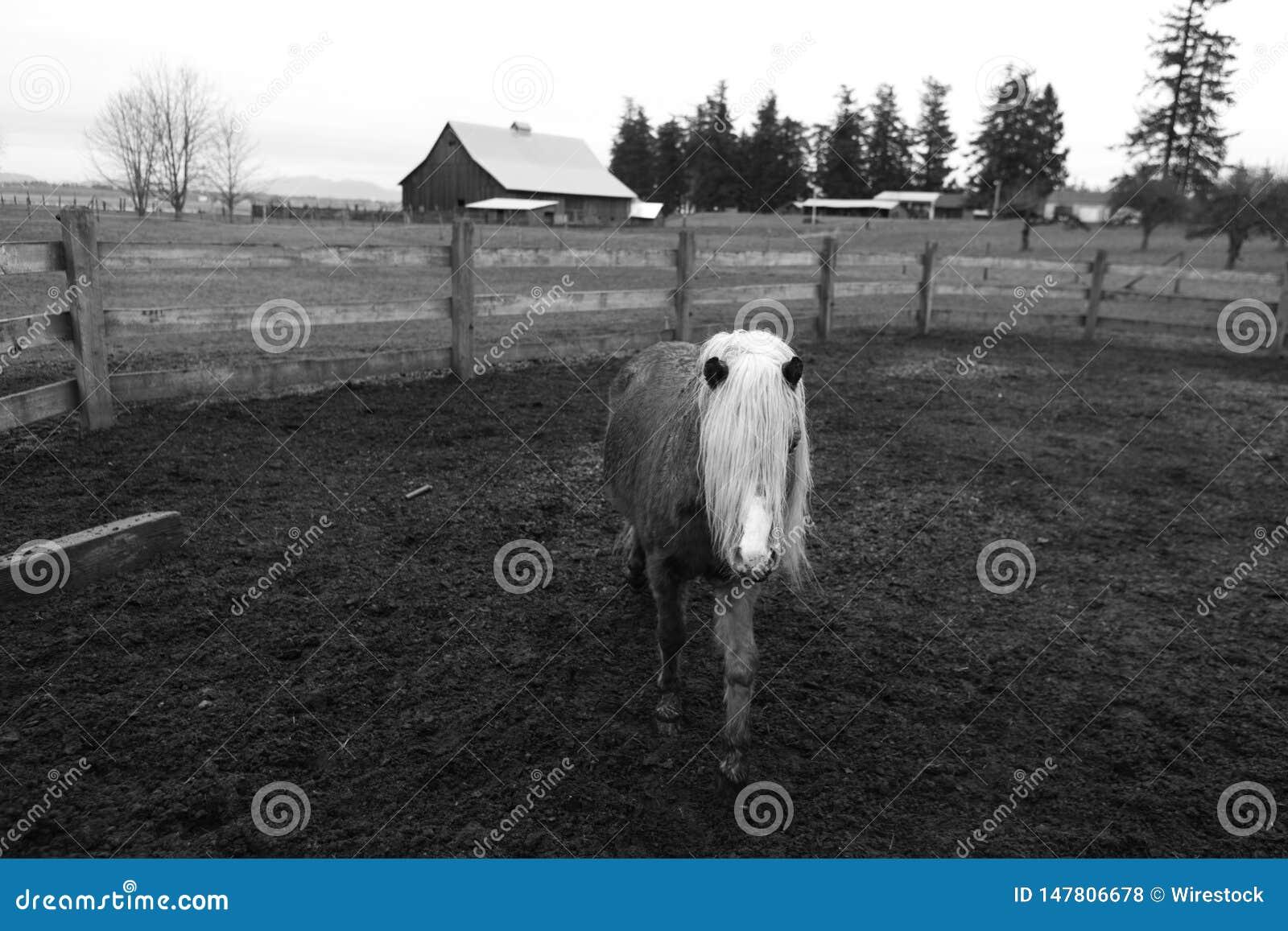 Ein schönes einzelnes junges Pony in einem Bauernhof