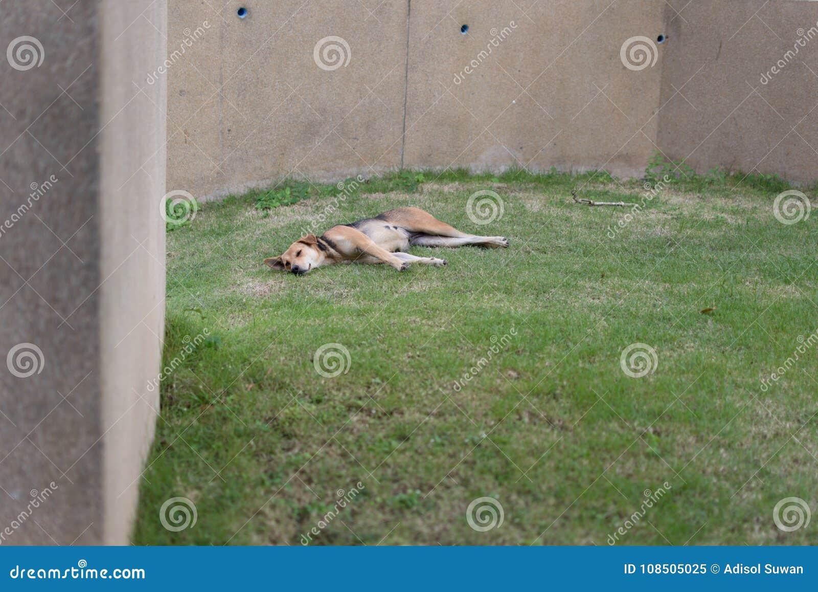Ein Schlafenhund