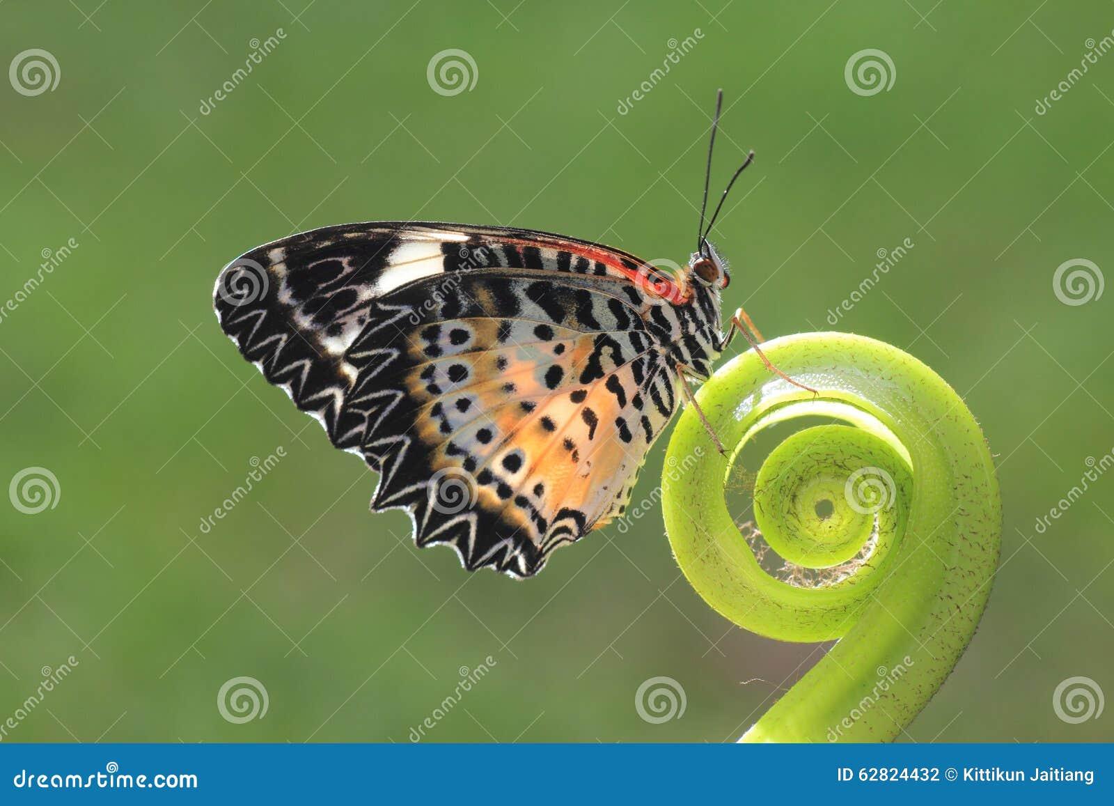Ein Schmetterling auf dem grünen Blatt