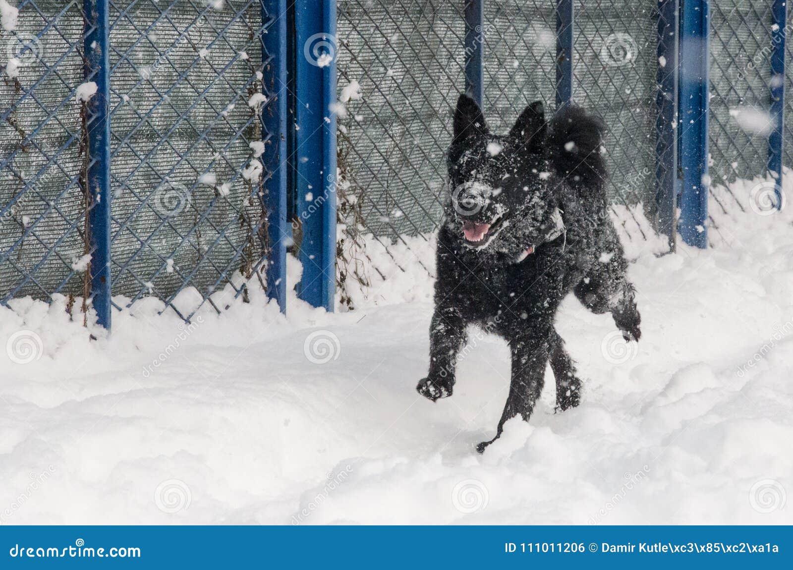 Ein schwarzer Hund im Schnee