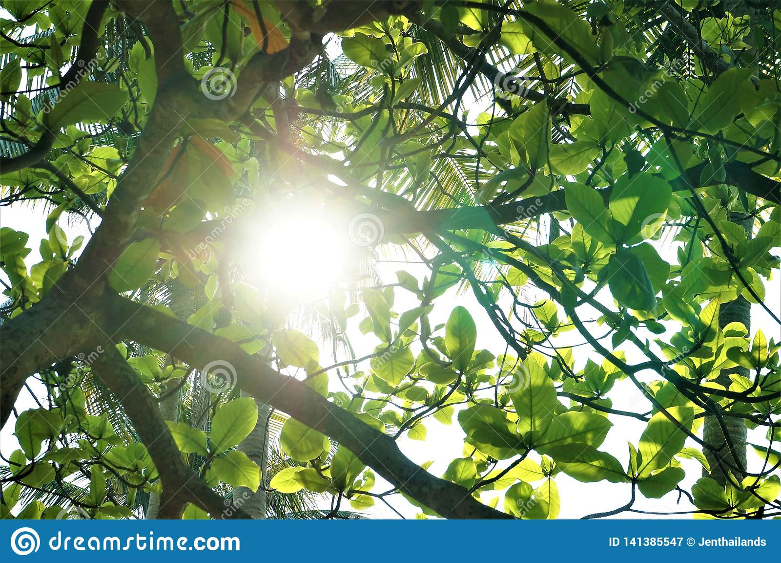 Ein Sonnenstrahl, der durch Blätter durchbohrt
