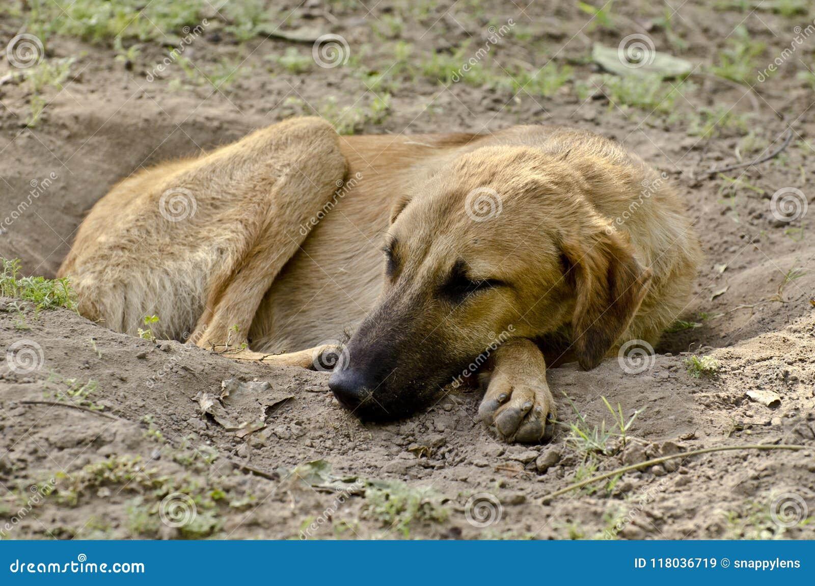Ein streunender Hund, der ruhig in einem Abzugsgraben schläft