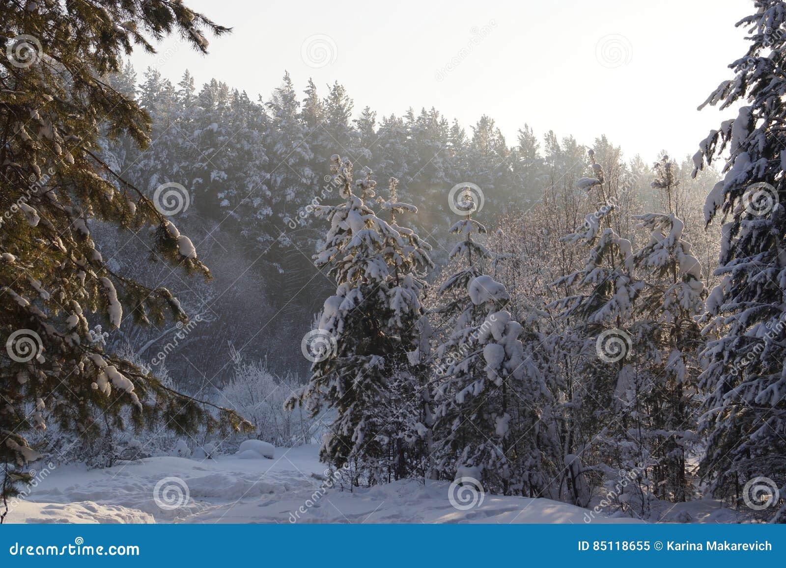 Ein Wahrer Sibirischer Winter Guten Morgen Stockbild Bild