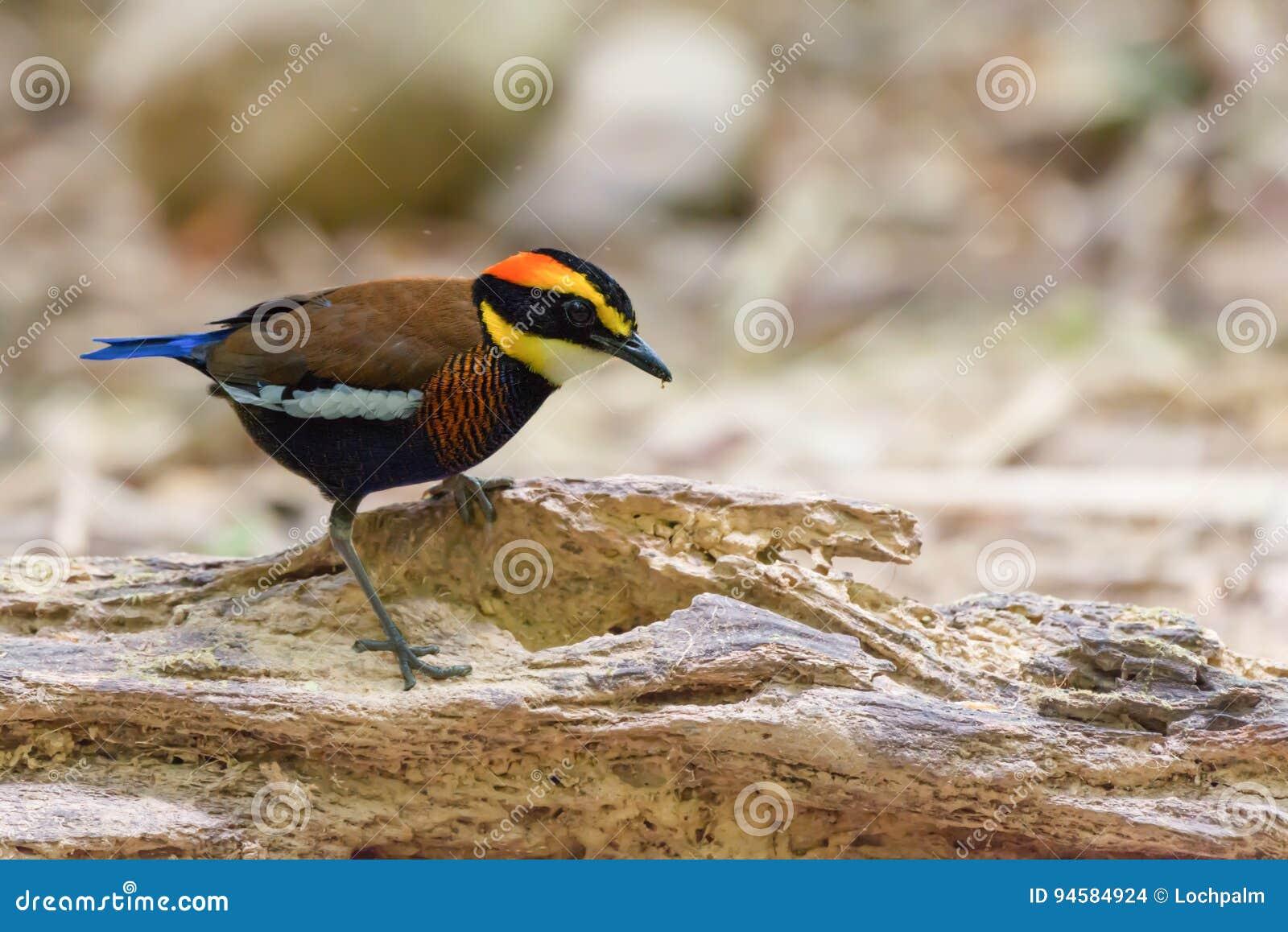 Ein was für bunter gehender Vogel