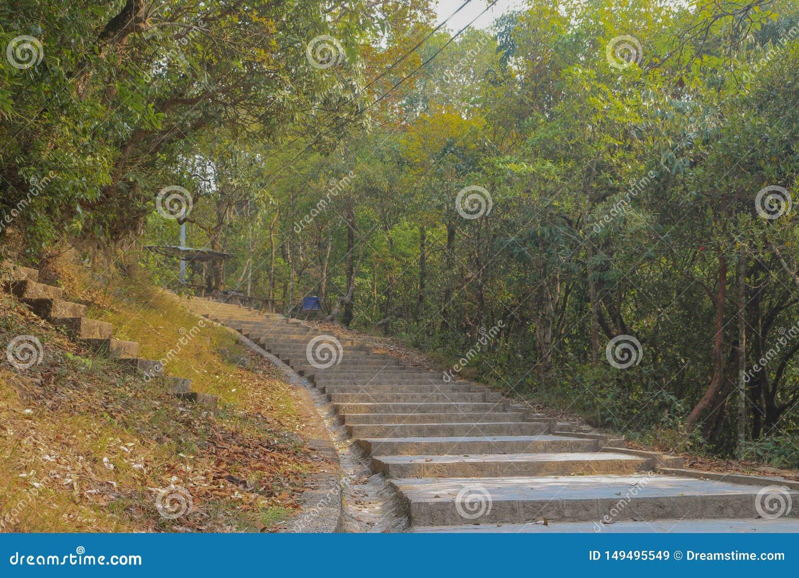 Ein Weg auf Wald