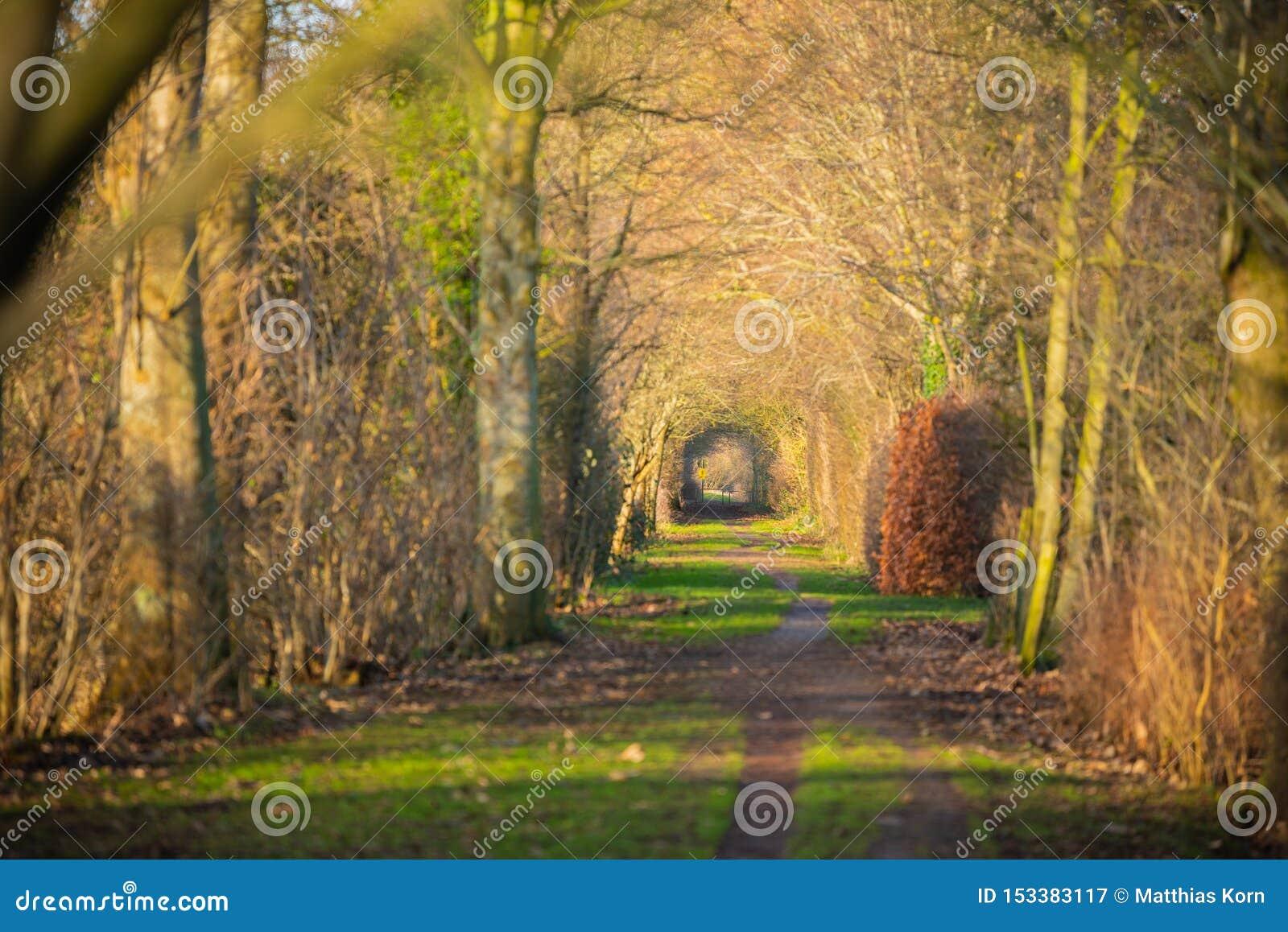 Ein Weg durch einen Herbstwald