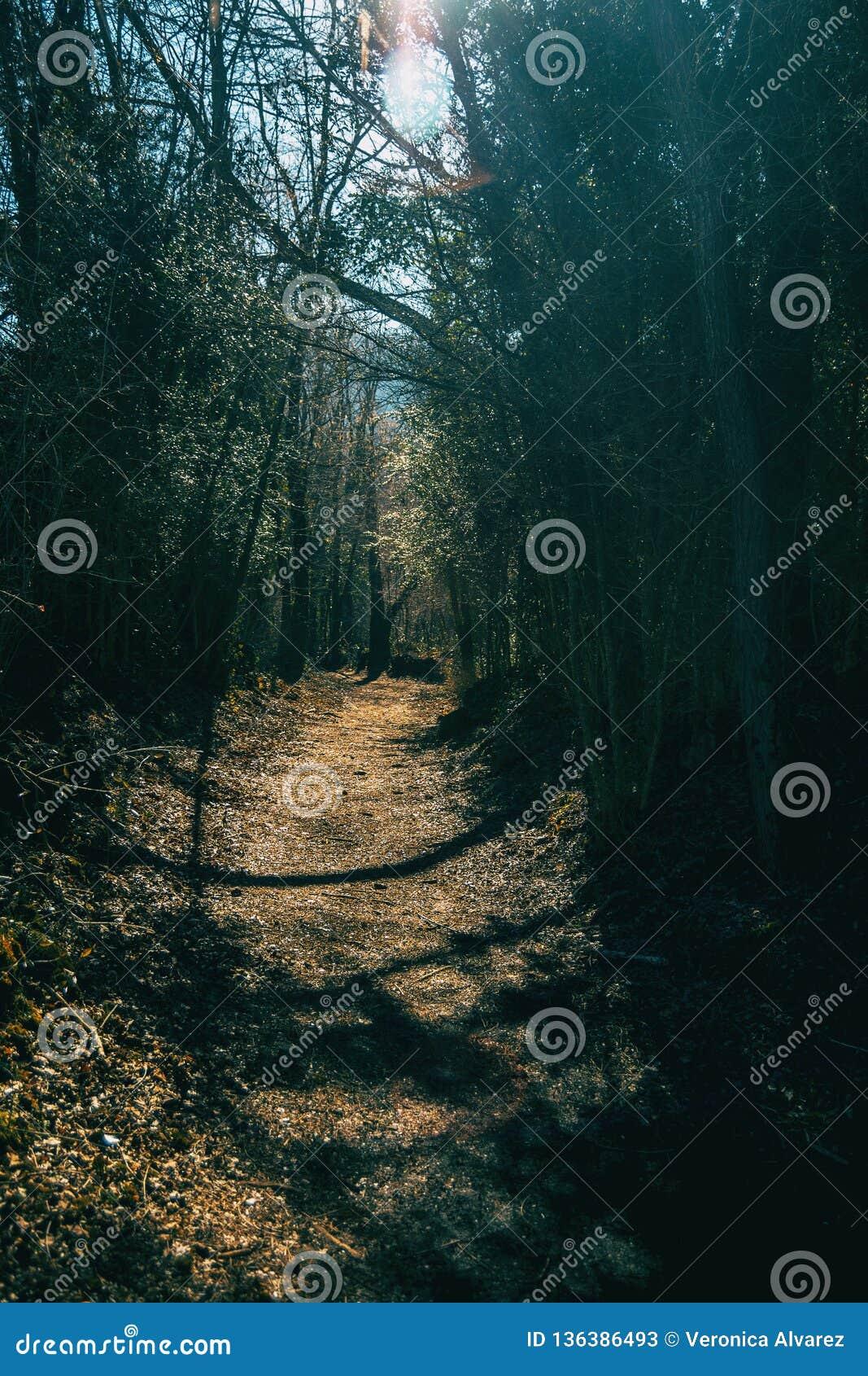 Ein Weg tief im Wald