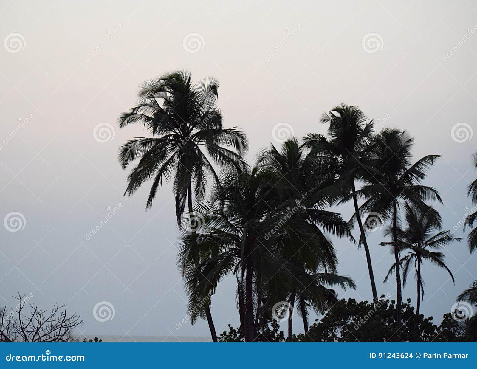 Eind van de Dag - Palmen in Avondhemel - Natuurlijke Achtergrond