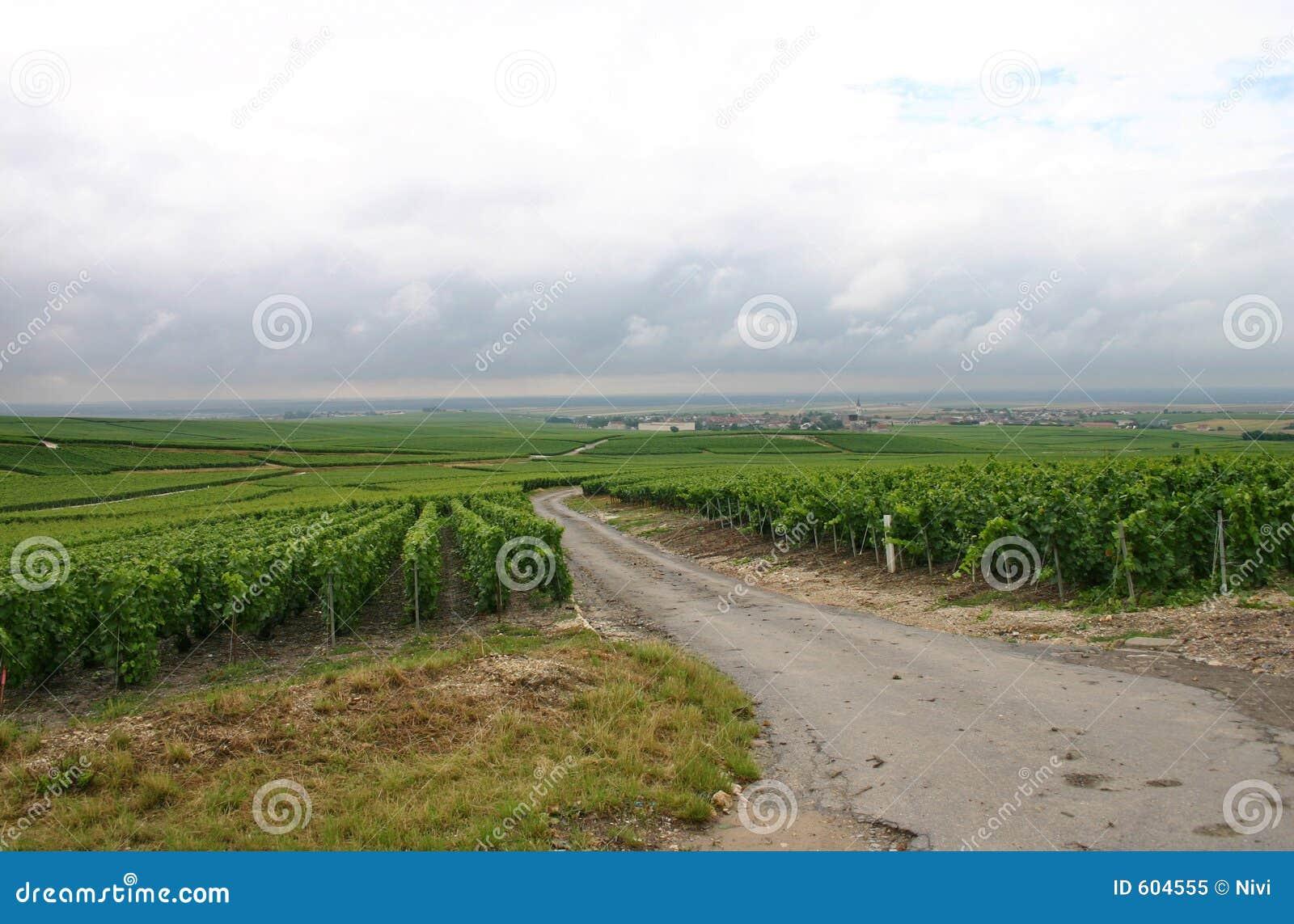 Eindeloze wijngaard
