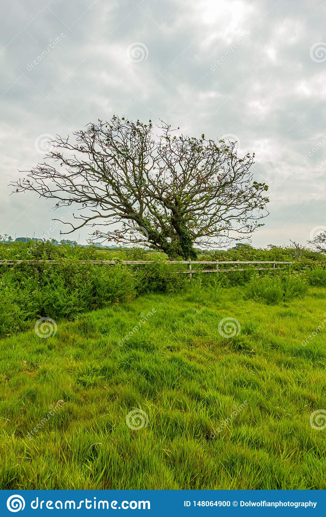 Eine Ansicht eines Blütenbaums entlang einem Bretterzaun mit Gras und grüner Vegetation unter einem weißen bewölkten Himmel
