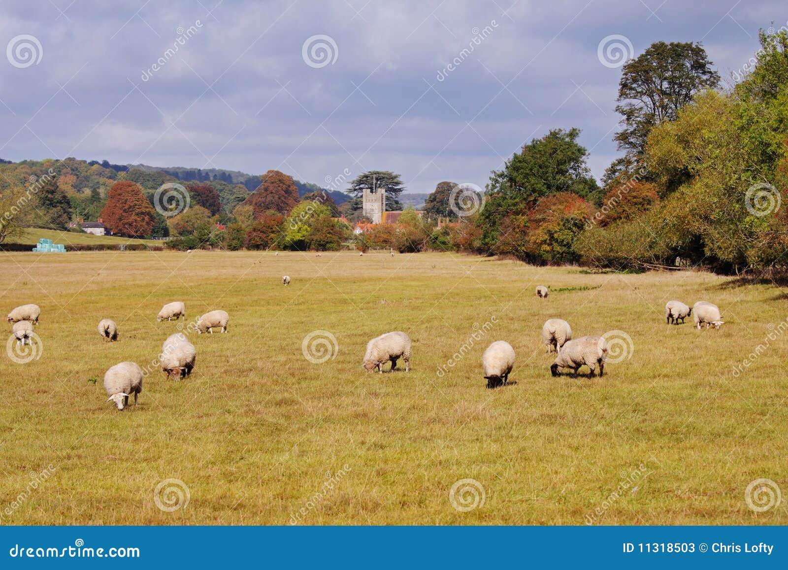 Eine englische landwirtschaftliche Landschaft